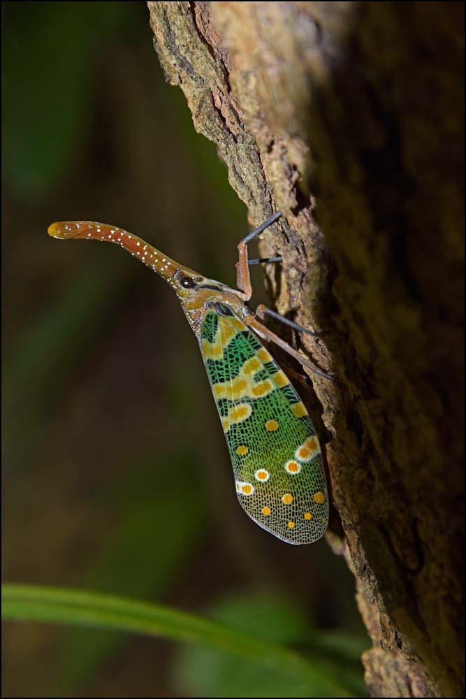 17-1585 Insekt CHM.jpg