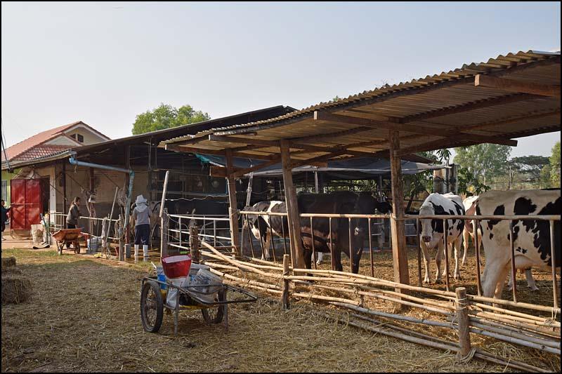 18-0364 På mjölkfarmen KOK.jpg