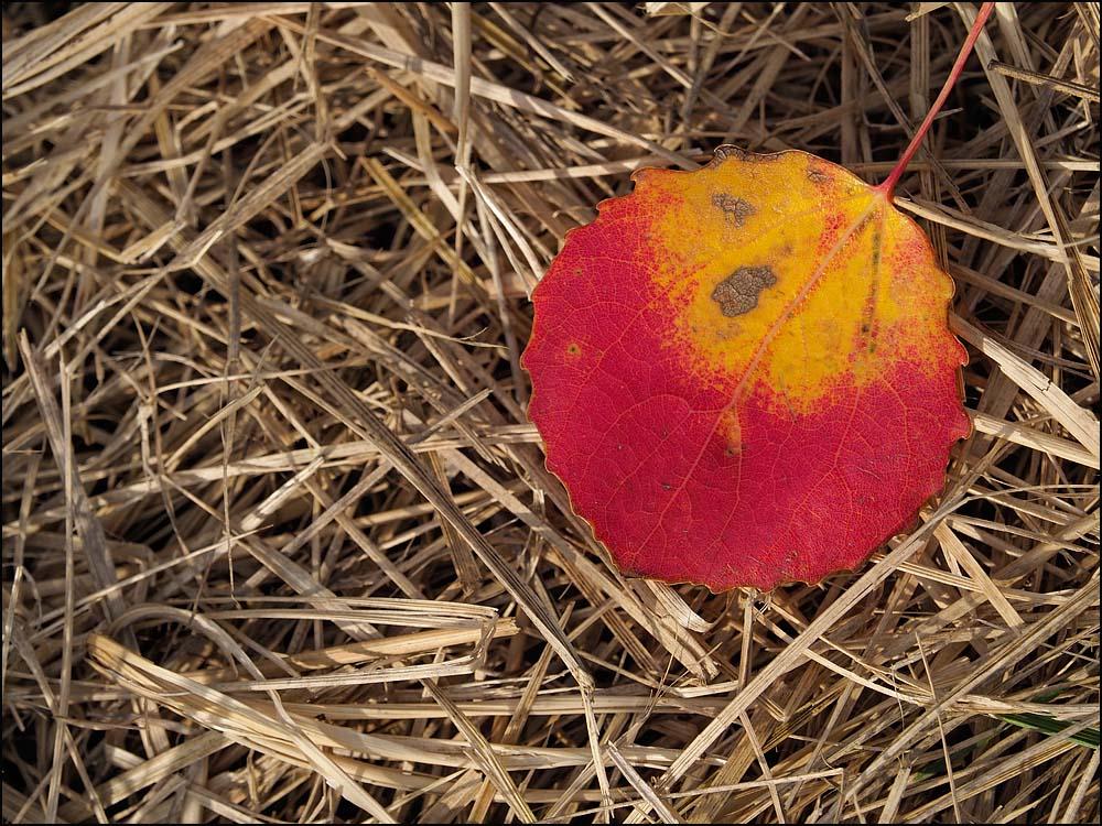 18-1477 Asplöv i gräset.jpg