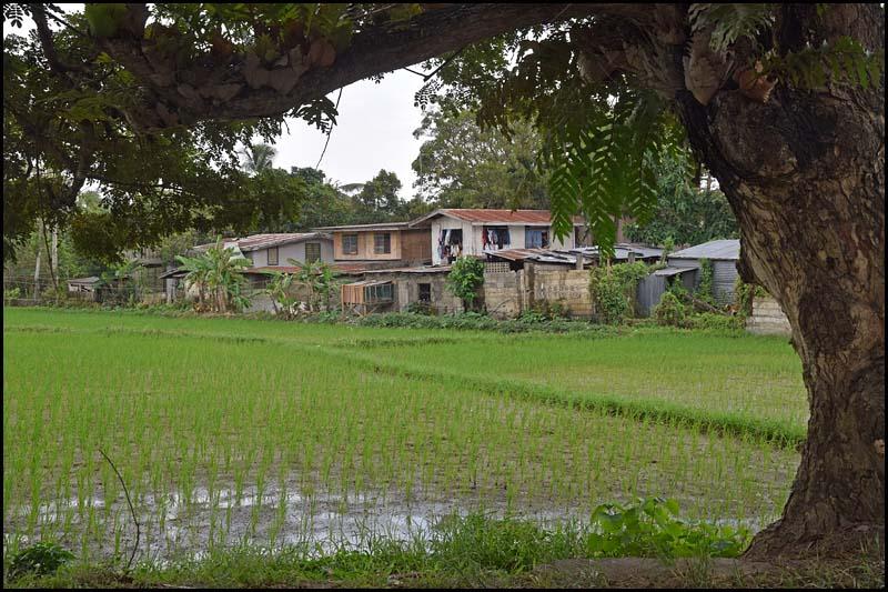 18-2419 Träd och bebyggelse CEB.jpg