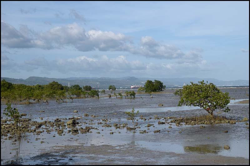 19-0005 Mangrovestrand CEB.jpg