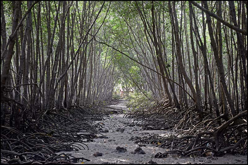 19-0020 Mangroveskog CEB.jpg
