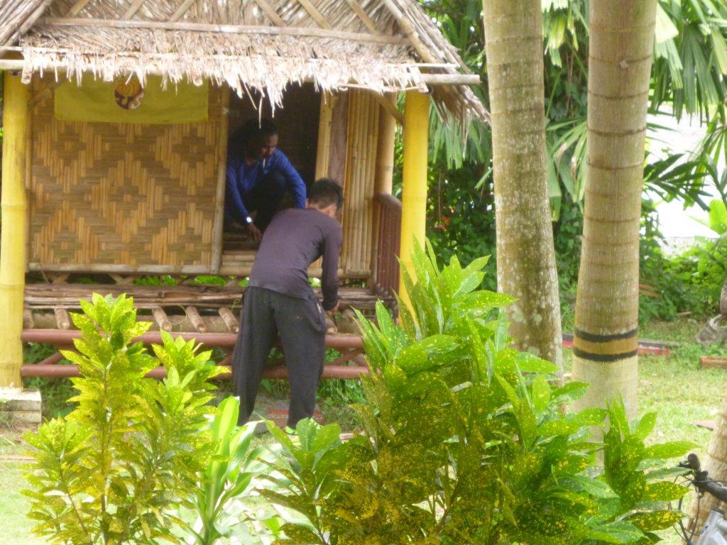 bamboo (3).JPG
