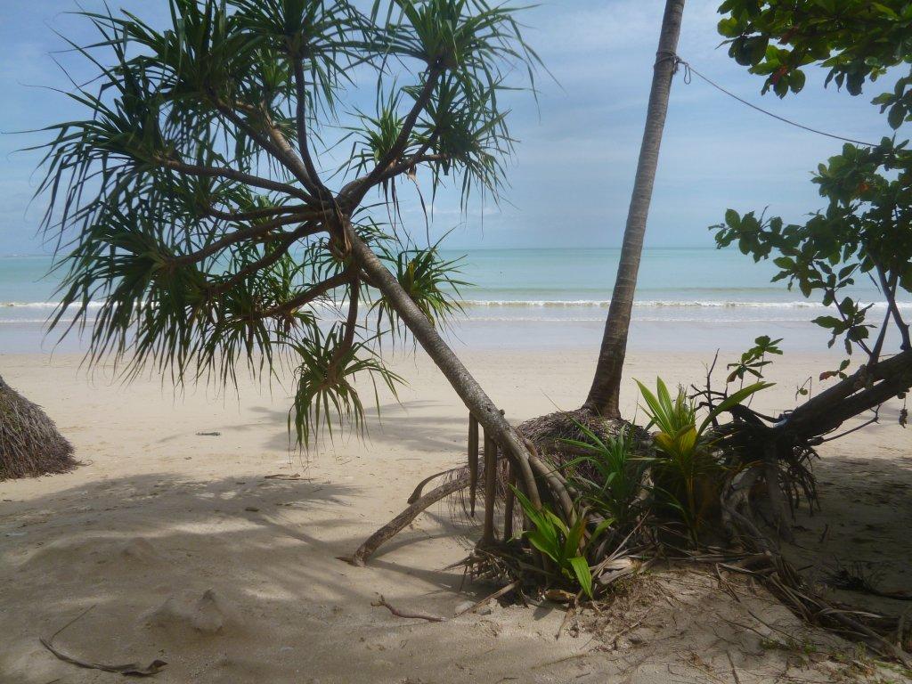 coconutbeach.JPG