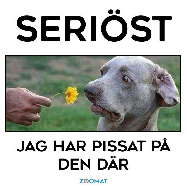 Lukta på blomman...jpg